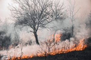 Floresta pegando fogo.