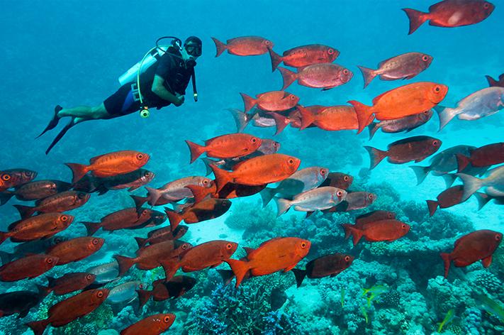 Mergulho no Mar Vermelho, no Egito